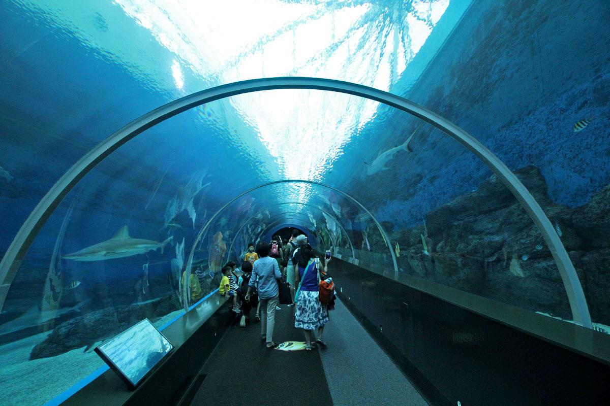 Wisata Hiburan di Singapura : S.E.A Aquarium @Marine Life ParkWisata Hiburan di Singapura : S.E.A Aquarium @Marine Life Park