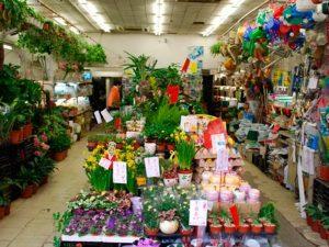 Street Market di Mong Kok : Flower Market