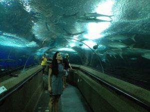 Wisata Hiburan di Singapura : Sentosa Underwater World